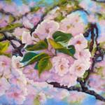 Cerisier en fleur-pastel-Patricia Sannier